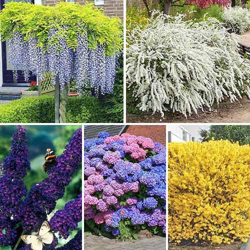 Супер предложения! Комплект Многогодишна градина от 5 корена изображение 1 артикул 9190
