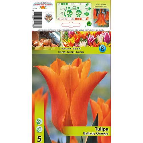 Лале Ballade Orange изображение 1 артикул 67690