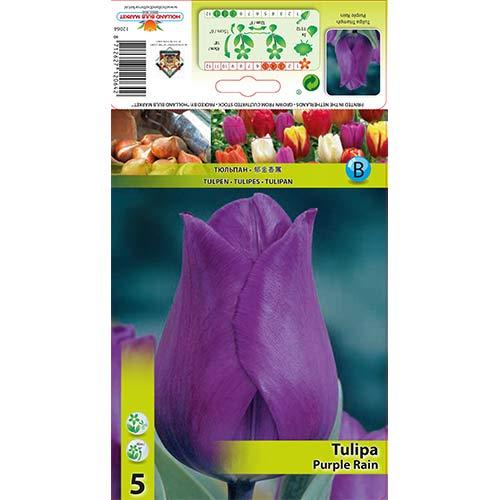 Лале Purple Rain изображение 1 артикул 67792