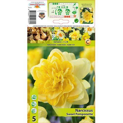 Нарцис Sweet Pomponette изображение 1 артикул 67414