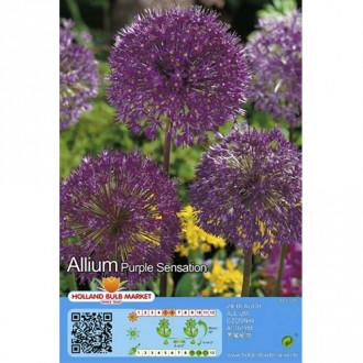 Алиум Purple Sensation изображение 3