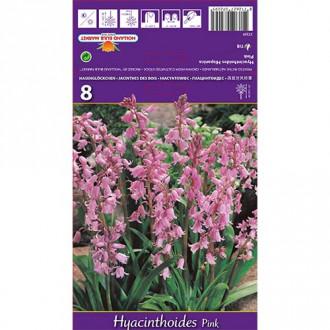 Хиацинтоидес Pink изображение 1