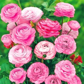 Лютиче (лютик) Pink изображение 3