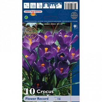 Минзухар Flower Record изображение 7