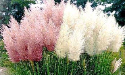 Градина от аромати | Беккер.Бу